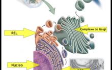 Endereçamento de Proteínas – Transporte, Secreção de Vesículas Célula