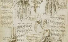 Desenhos Anatômicos de Leonardo da Vinci – Arte e Ciência na Medicina