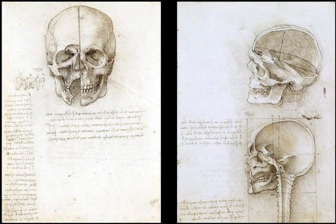 Estudos de Anatomia - Esboços de Leonardo da Vinci