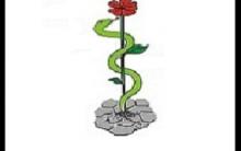 Livros de Medicina – Campanha de Doação para Estudantes Blog ABC da Medicina