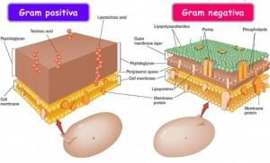 Antibacterianos – Classes de Remédios e Mecanismos de Ação