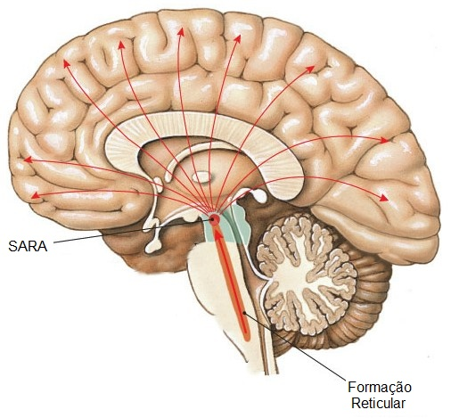 Revisão da Anatomia do SNC  Fonte: Ocularis.es
